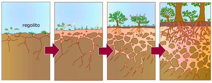 3 formaci n del suelo for Como se forma y desarrolla el suelo
